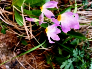 Purple Flower IMG_1802