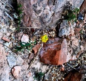 Yellow Flower IMG_1799